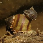 Life of snails